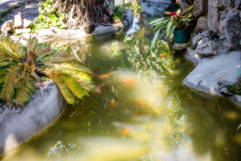 Aquario na Fazendinha | Foto: Vilma Ribeiro