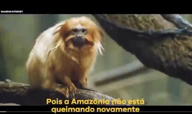 Amazônia ESTÁ pegando fogo em 2020