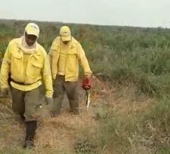 Vídeo de brigadistas do ICMBio colocando fogo na mata é medida para combater incêndio no Pantanal