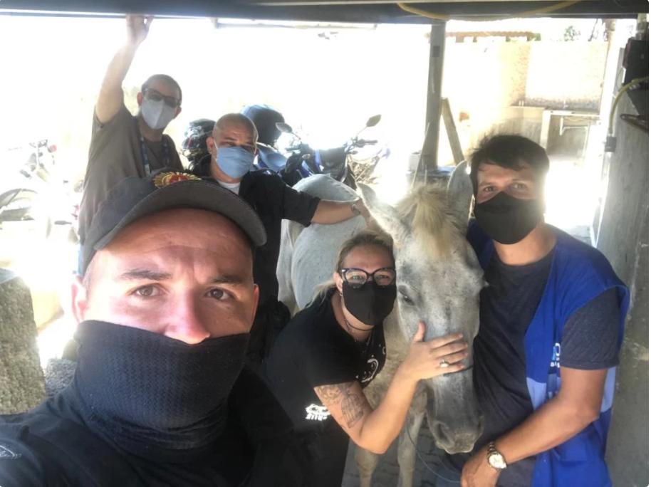 Cavalo que sofria maus-tratos é salvo por policiais da UPP do Alemão