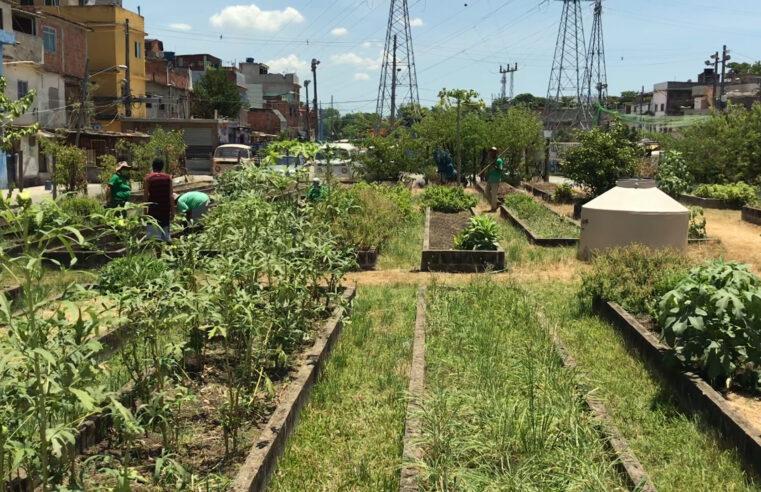 Horta Comunitária de Manguinhos: projeto oferece alimentos saudáveis e transforma vidas