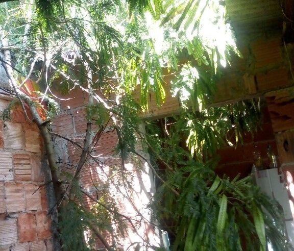Susto! Árvore caiu em cima de uma casa no Areal, Complexo do Alemão