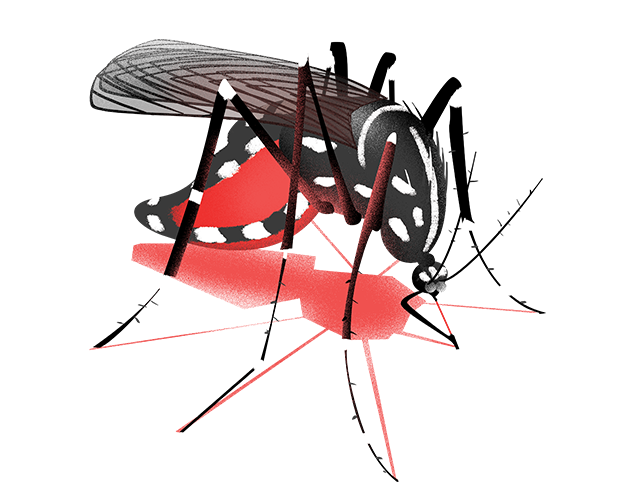 Em meio à pandemia da Covid-19, é necessário também estar atento com a dengue