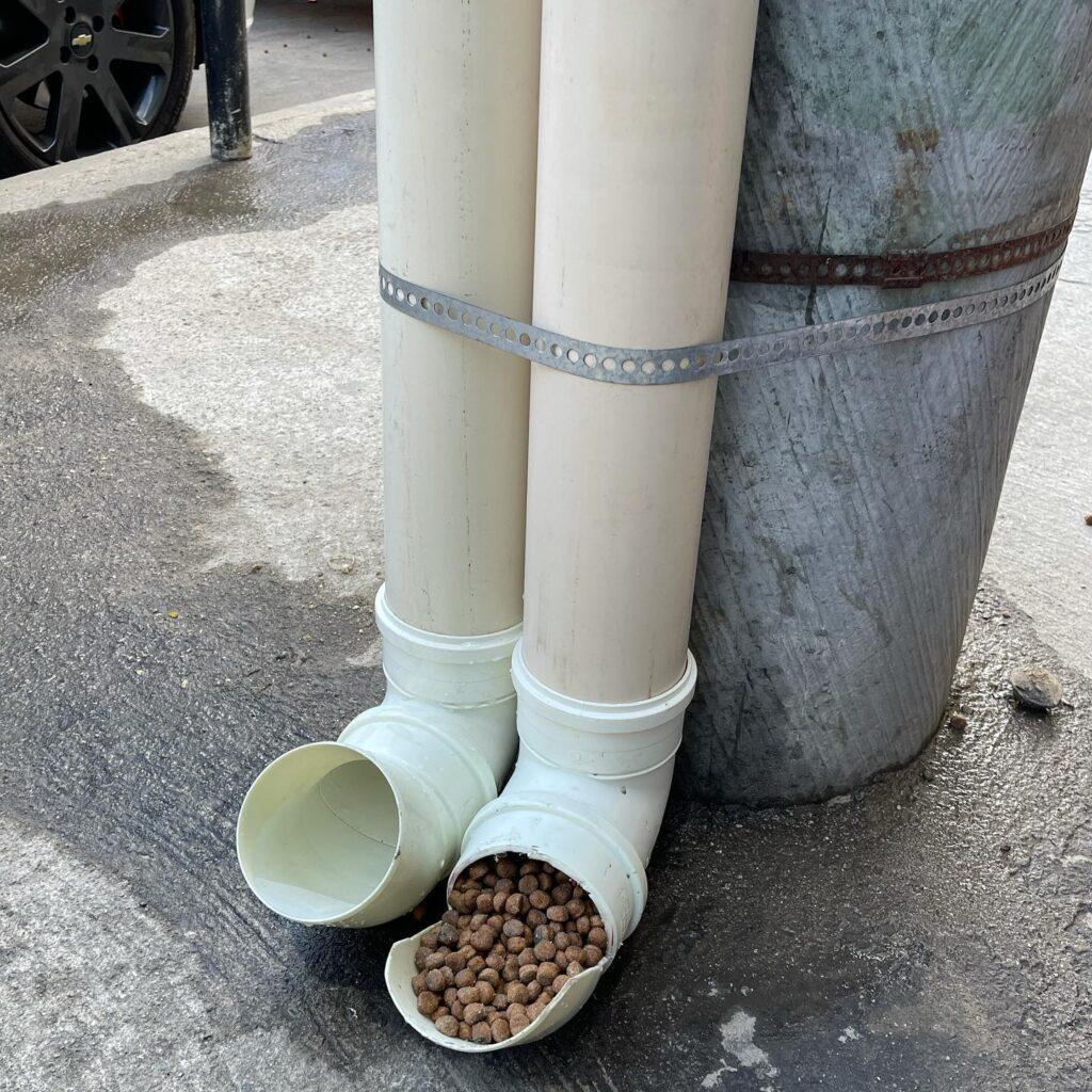 Em forma de homenagem a sua cadela, o artista instalou pontos comunitários de água e comida para cachorros em cinco pontos da região